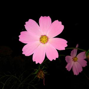 Цветочные фонарики