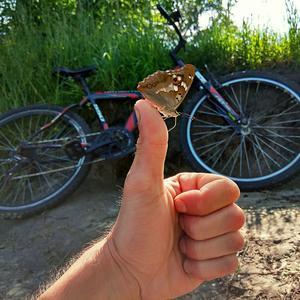 Солнце, бабочки и велосипеды... Лето, однако...