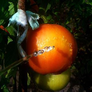 Привет, помидорчик