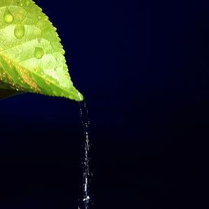 Вишнёвый листок
