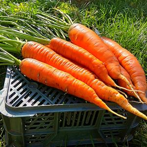 Урожай витамин