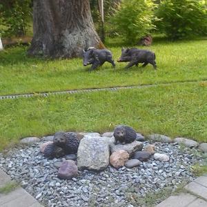 Кабанчики спешат к семье ёжиков