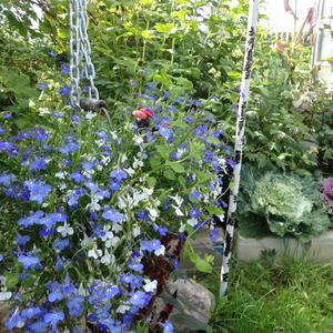 Голубое облако в саду