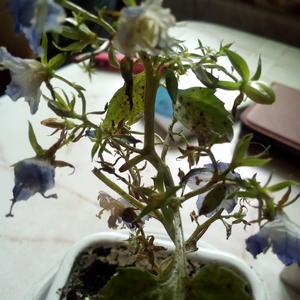 Подскажите, чем заболел мой цветок?