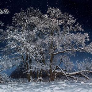 Новогодний снег