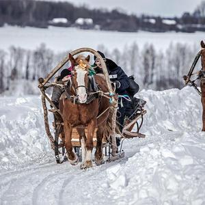 Гляжу, поднимается медленно в гору, лошадка... не, две лошадки