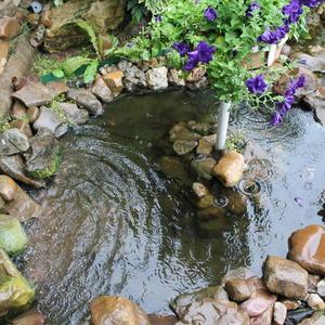 Наполняется от дождика пруд каменистый