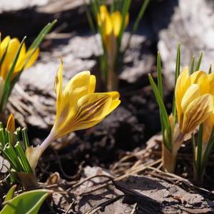 Привет весне
