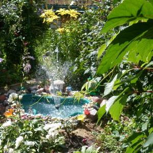 Озеро Селигер с фонтаном прижилось в нашем саду