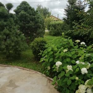 Наш маленький лес перед домом)))