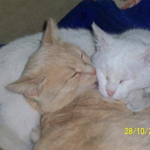 Кошки тоже целуются!