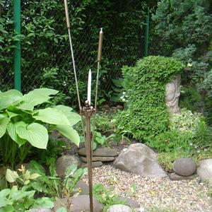 В садовом пруде своя растительность