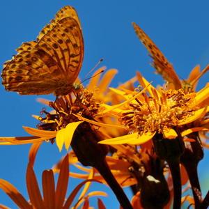 Солнечные бабочки на солнечном цветке
