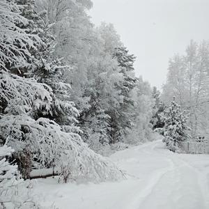 Все вокруг белым-бело! Много снега намело!