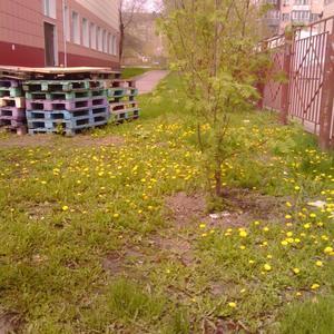 Одуванчиковая полянка в школе