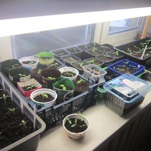Моя маленькая плантация