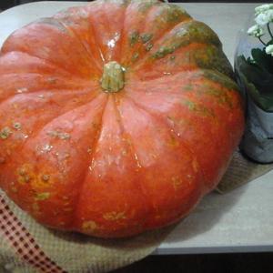 Осенняя оранжевость