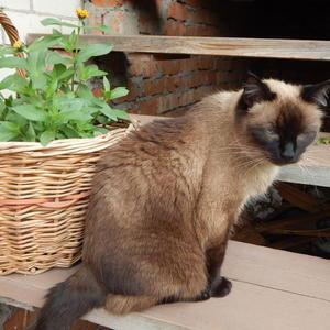 """Кот ожидающий: Хозяйка уехала в город. Мне """"Вискас"""" она привезет. Не может все лето на даче есть только мышей старый кот"""