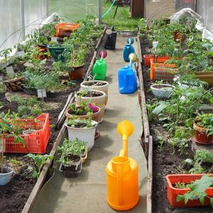Гостеприимные томаты, или Весенняя коммунальная квартира