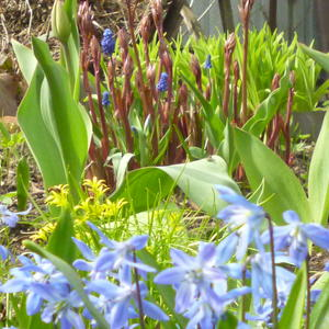 Весенний парад первоцветов