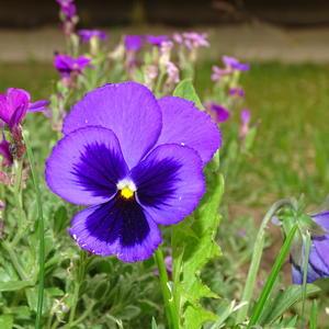 Группа в фиолетовых одеяниях