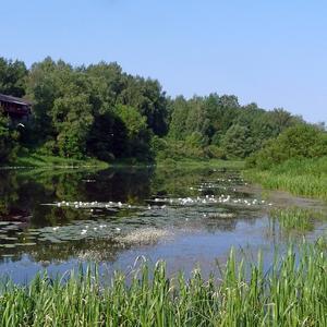 Наша тихая речка