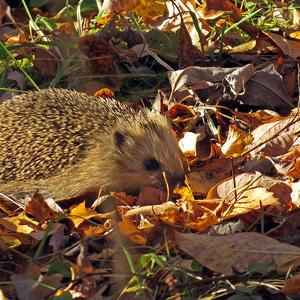 Что осень спрятала в листочках?