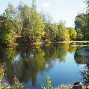 Осенний пруд в родной деревне...