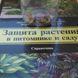 Июльские личинки майских жуков