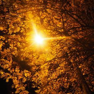 Сквозь густые ветви...