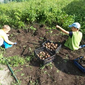 Кто-то копает картошку, а кто-то - червяков)))