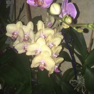 Под лампами, без них выдавали по 5 цветочков