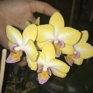 Первое цветение подростка