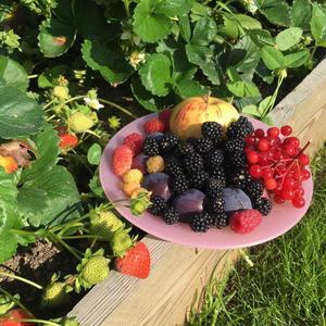 Натюрморт фруктово-ягодный
