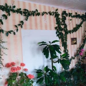 Мой зимний сад. Продолжение