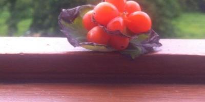 Что эта за ягода?
