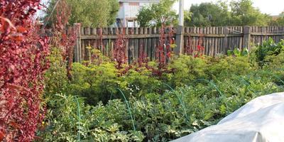 Мой сибирский огород - моя гордость!!!!!