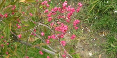 Что это за растение и как его можно использовать?