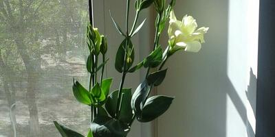 Что за цветы?