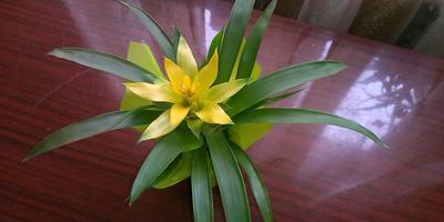Помогите определить цветок