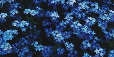 Помогите узнать название цветов