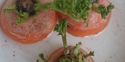 Возможно ли вырастить морковь из обрезков?