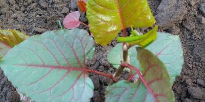 Что за растение на фото?