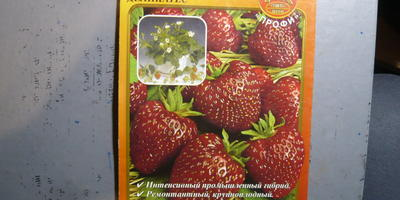 Что я выращиваю - клубнику или землянику?