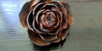 Помогите определить, какому растению принадлежит шишка