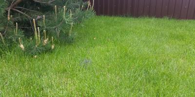 Что с моим газоном и как с этим бороться?