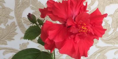 Как правильно называется этот цветок?