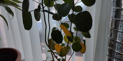 На всех цветах желтеют и сохнут листья. Что делать?