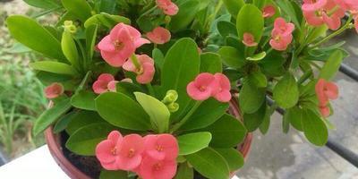Пожалуйста, скажите, как называется растение?