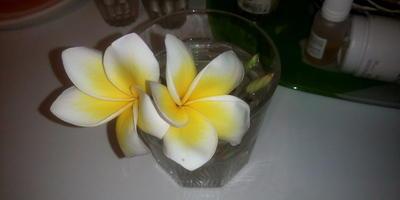 Привезла из Вьетнама надломленный цветок дерева орхидеи. Что нужно сделать, чтобы он пустил корни?